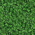 Green grass clover seamless texture