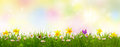 Green grass and colorful spring flowers easter background Royalty Free Stock Photography