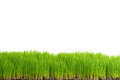 Green grass with copy space Royalty Free Stock Photos