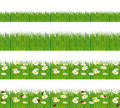 Green grass with daisies and ladybugs nature foregrounds banners Stock Photo