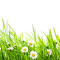 Green grass and daisy border with flowers for spring design Royalty Free Stock Images