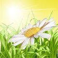 Green grass with daisy summer background vector illustration Stock Image