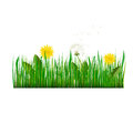 Green Grass with dandelion Vector Illustration
