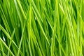 Green Grass Details Royalty Free Stock Photo