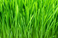 Green grass with dew Stock Photos