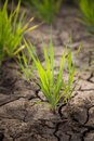 Green grass and dried soil Royalty Free Stock Photos