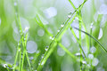 Green grass with drops Royalty Free Stock Photos