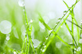 Green grass with drops Royalty Free Stock Images