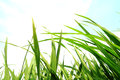 Green grass,environmental protection concept Royalty Free Stock Photo