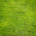 Green grass field background, texture, pattern Royalty Free Stock Photo