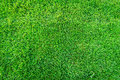 Royalty Free Stock Photography Green grass field background, texture, pattern