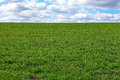Green grass field with blue sky and clouds Stock Image
