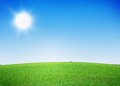 Green grass field and clear blue sky Royalty Free Stock Photo