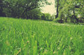 Green grass field in the countryside in spring; low angle tilted view; retro style Royalty Free Stock Photo
