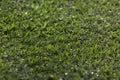 Green grass field depth of field Stock Photo
