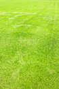 Green grass field Royalty Free Stock Photo