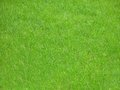 Green grass field of fresh Stock Image
