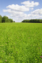 Green grass field landscape Stock Image