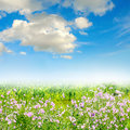 Green grass on the field summer Royalty Free Stock Images