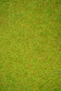 Green grass field texture background. Royalty Free Stock Photo