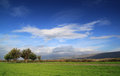 Green Grass Field with Trees on Deep Blue Sky Royalty Free Stock Photo