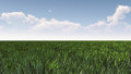 Green grass field under blue sky Royalty Free Stock Photo