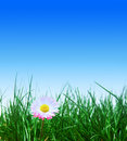 Green grass, flower and blue sky Royalty Free Stock Photo