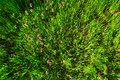 Green grass with flowers shot from above see my other works in portfolio Royalty Free Stock Photos