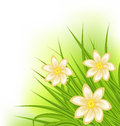 Green grass with flowers spring background illustration Royalty Free Stock Photo