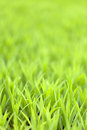 Green grass foliage grassy or plant close up shallow depth of field Stock Photography
