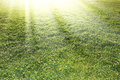 Green grass fresh with bright sun light Stock Photography