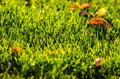 Green grass freshly cut in the sunset light Stock Images