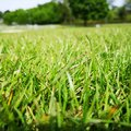Grass is greener Royalty Free Stock Photo