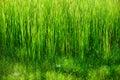 Green grass and gossamer Stock Photo