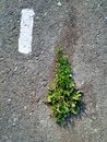 stock image of  Green grass on the grey asphalt. Spot painted with white paint