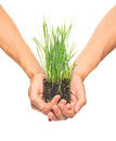 Green grass in human hands Royalty Free Stock Photo