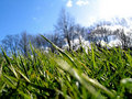 Green Grass II Royalty Free Stock Photo