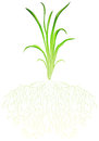 A green grass illustration of on white background Royalty Free Stock Image