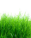 Green grass isolated on the white Royalty Free Stock Photography