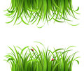 Green grass with ladybirds Royalty Free Stock Photo