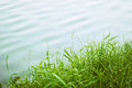 Green grass and lake water background Stock Images