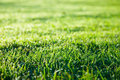 Green grass lawn Stock Image