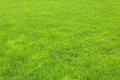 Green grass lawn with new after rain Royalty Free Stock Photos