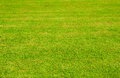 Green grass lawn in sublight background Stock Photography