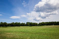 Green grass lawn at sunny day nature summer background Stock Images