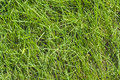 Green grass lawn at sunny summer day as natural background Stock Photo