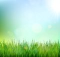 Green grass lawn with sunrise on blue sky. Floral nature spring background Royalty Free Stock Photo