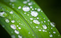 Green grass leaf with shining dew macro of fresh in spring forest Stock Photography