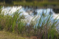 Green Grass Leaves Against Water Ripples and Reflections Background Royalty Free Stock Photo