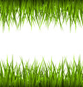 Green grass like frame isolated on white. Floral eco nature Royalty Free Stock Photo